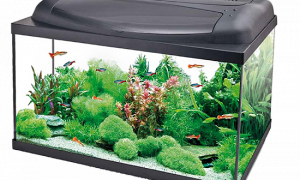 Как заказать аквариум: шпаргалка для начинающих аквариумистов